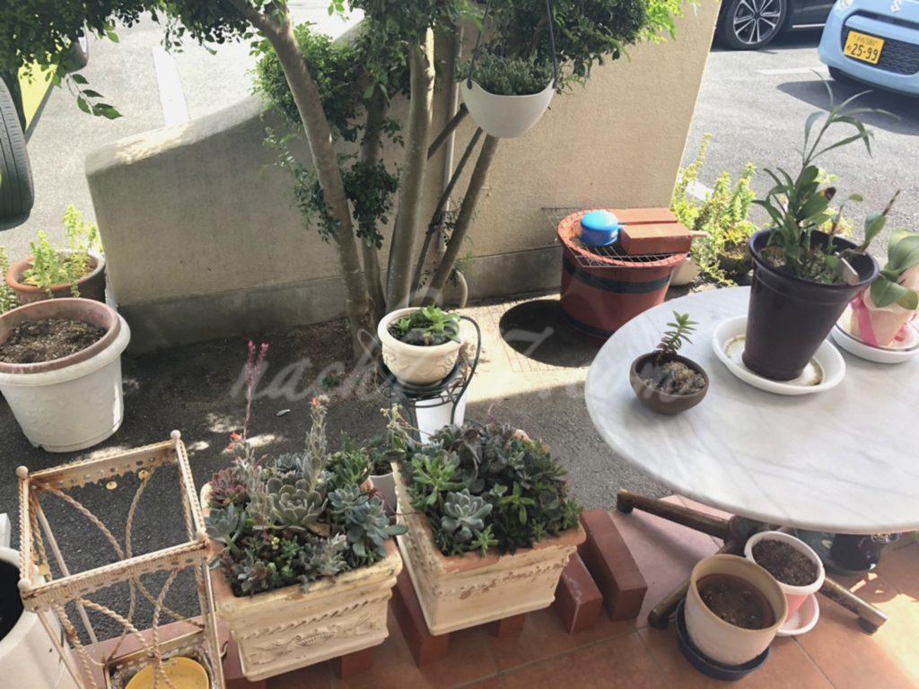入口には植物がいっぱい