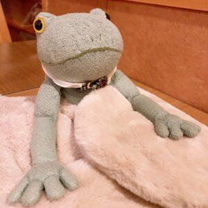 モンスイユのカエルぬいぐるみブリトーとの日々